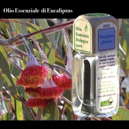 Puro olio essenziale d'origine BIOLOGICA di EUCALIPTUS (Eucaliptus globulus)